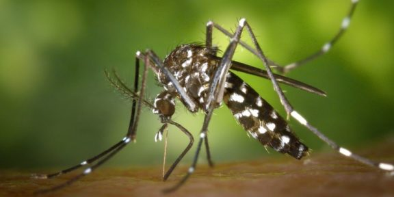 Dengue fever Climate Change Brazil